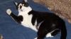 """O nouă şansă la viaţă pentru două pisici după ce le-au fost implantate două """"lăbuțe bionice"""""""