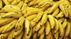 Fructe exotice INFECTATE, cât pe ce să fie introduse în Ucraina. De unde provine marfa