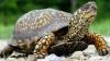 INCENDIU, provocat de o broască ţestoasă. Daunele provocate de flăcări sunt de circa 150.000 de dolari