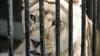 Interpol introduce un nou program pentru COMBATEREA TRAFICULUI de animale sălbatice