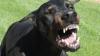 STRIGĂTE DE GROAZĂ! Detalii despre femeia muşcată de câine: ERA ÎN STARE DE ŞOC