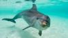 Îngrozitor! OAMENII au făcut selfie cu un delfin până acesta a MURIT. Unde s-a produs tragedia