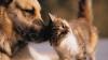 Şapte alimente pe care NU ar trebui să le dai niciodată animalului tău de companie