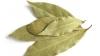 Plantă MIRACULOASĂ! Afecțiuni în care dafinul îți vine în ajutor