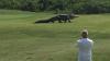 Godzilla există şi trăieşte în Florida! MONSTRUL URIAŞ a fost filmat de turişti (VIDEO)