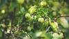 #LifeStyle. Secretul unor pomi mai roditori şi mai frumoşi