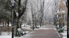 Reacția chișinăuienilor la defrișarea arborilor din centrul Capitalei. Ce spun autoritățile