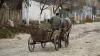 CRUZIME FĂRĂ MARGINI la Cimișlia! Un cal, ucis cu bestialitate de propriul stăpân (FOTO 18+)