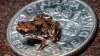 Descoperire INEDITĂ! Cât măsoară cea mai mică vertebrată din lume