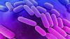 O bacterie rezistentă la 26 de tipuri de antibiotice a ucis o femeie din Statele Unite