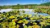 """Rezervația biosferei """"Prutul de Jos"""" din raionul Cahul ar putea intra în patrimoniul UNESCO"""