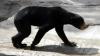 CRUZIME FĂRĂ MARGINI! Condiţiile în care sunt ţinuţi nişte urşi la o gradină Zoo (VIDEO)