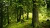 STUDIU: Obiectivele de protecţie a mediului pot eşua dacă nu se iau măsuri pentru conservarea pădurilor virgine
