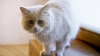 MORI DE RÂS! REACŢIA unei pisici atunci când este gâdilată (VIDEO)