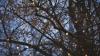 Tăieri de arbori planificate în Capitală! Declaraţiile autorităţilor
