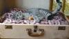 Idei pe care le poţi pune în practică! Moduri spectaculoase pentru folosirea valizelor vechi (FOTO)