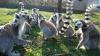 CANICULĂ în Australia. Animalele de la ZOO din Sydney au primit cuburi de gheaţă