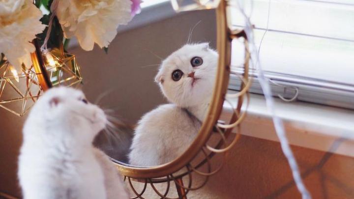 ADORABIL! Maisey, cea mai ruşinoasă pisică din lume (FOTO)