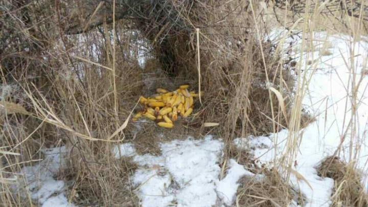 Un braconier din Leova, prins în flagrant de inspectorii de mediu (FOTO)