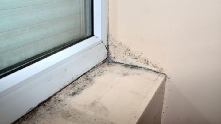 UTIL! Simptomele care îţi spun că eşti intoxicat cu mucegai. Ce trebuie să faci