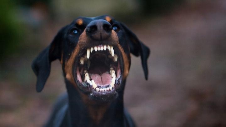 O femeie din Capitală, muşcată de faţă de propriul câine. Cum a avut loc întâmplarea groaznică