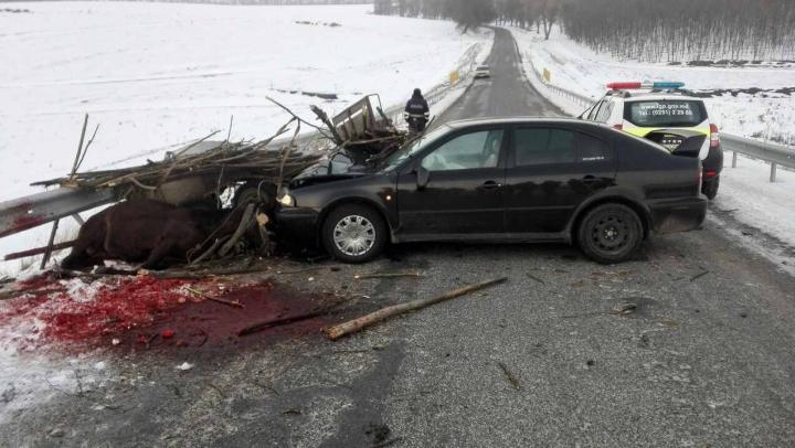 ACCIDENT TERIBIL la Dondușeni: Un automobil Skoda a intrat într-o căruță (FOTO)