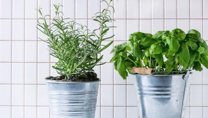 Cinci plante aromatice care curăță aerul din bucătărie