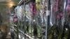 Flori în valoare de PESTE UN MILION DE LEI, fără acte de provenienţă. Ce a declarat şoferul