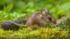 Dezactivarea unui receptor neural duce la pierderea memoriei fricii la şoareci