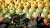 ATENȚIE! Cum recunoști fructele pline de substanțe chimice