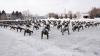 """FORŢĂ ŞI SOLIDARITATE! Militarii Armatei Naţionale s-au alăturat acţiunii """"22 Push-up Challenge"""" (FOTO)"""