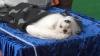 Cele mai deosebite rase de câini, la o expoziţie internaţională organizată în Capitală
