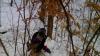 Imagini ŞOCANTE într-o pădure din România. Mai multe caprioare se zbat în lațuri puse de braconieri (VIDEO)
