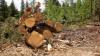 UIMITOR! Cum contribuie despăduririle la transmiterea bolilor de la animal la om