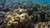 Cercetătorii anunță un plan global de salvare a recifelor de corali, ce ar putea fi decimate până în 2050