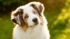 STUDIU: Câinii își pot da seama când cineva este nepoliticos