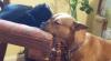 Prietenie inedită între un cățel și o pisică! Cum se alintă cei doi (VIDEO)