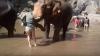 Momente de groază pentru o turistă! O femeie a fost atacată de un elefant (VIDEO)