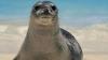 O focă se vrea campioană la caiac-canoe. Cui a decis să îi facă concurenţă (VIDEO)