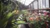 Au înflorit plantele exotice! La Grădina Botanică din Capitală E PRIMĂVARĂ şi O FRUMUSEŢE RARĂ
