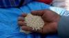 Cereala VIITORULUI! Structura genomului său a fost decodată de cercetători