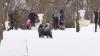 Distracţie pe sanie şi schiuri! Zeci de moldoveni şi-au petrecut weekendul pe pârtie
