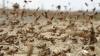 Invazie de lăcuste în China. Insectele distrug tot ce este verde în calea lor