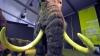 Mamutul blănos ar putea reveni în actualitate. Ce îşi propun cercetătorii