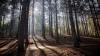 Pădurile din sudul ţării vor fi populate cu circa 150 de cerbi