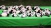 Cel mai drăguţ VIDEO. Cum arată 23 de urşi panda în timp ce încearcă să facă o poză de grup
