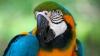 Un papagal din SUA, pasionat de filmele de groază. Care este pelicula preferată a păsării (VIDEO)