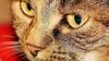 Pisicile pot să plângă? Află care este adevărul