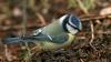 STUDIU: Observarea păsărilor diminuează stresul, riscul de depresie și anxietate
