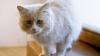 REACŢIILE AMUZANTE ale câinilor şi ale pisicilor când stăpânii le spun că le duc la veterinar